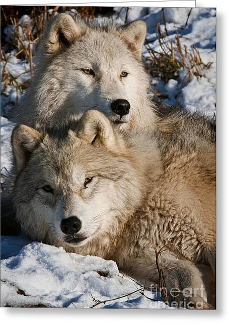 Wildlife Photography Greeting Cards - Mothers Love Greeting Card by Michael Cummings
