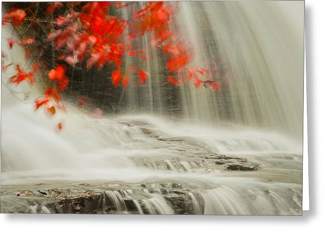 Fall Trees With Stream. Greeting Cards - Motion Greeting Card by Joye Ardyn Durham