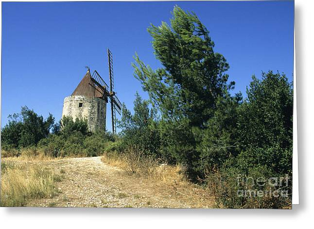 The Trees Photographs Greeting Cards - Moulin of Daudet. Fontvieille. Provence Greeting Card by Bernard Jaubert