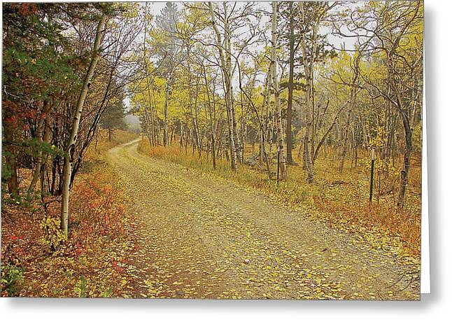 Mountain Road Greeting Cards - Mounment Gulch Rd. CO Greeting Card by James Steele