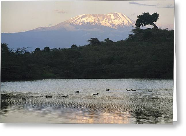 Mount Kilimanjaro National Park Greeting Cards - Mount Kilimanjaro Rises Above One Greeting Card by Richard Nowitz