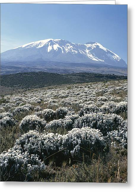 Scenes And Views Photographs Greeting Cards - Mount Kilimanjaro, The Breach Wall Greeting Card by David Pluth