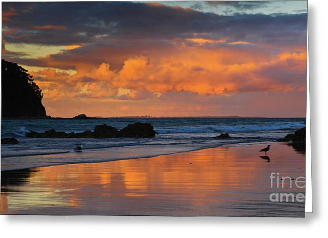 Mount Maunganui Greeting Cards - Mount Maunganui Beach Sunset Greeting Card by John Buxton