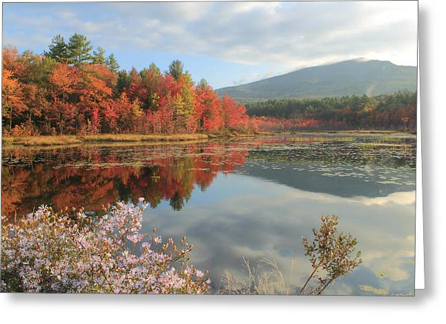 Aster Greeting Cards - Mount Monadnock Foliage and Asters Greeting Card by John Burk