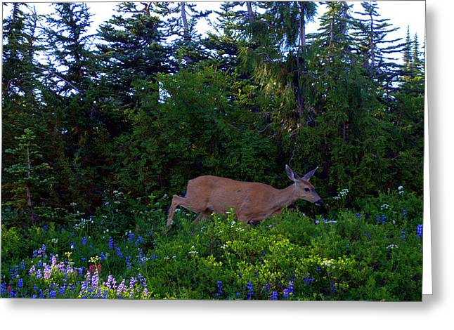 Mount Rainier Deer Greeting Card by Lynn Bawden