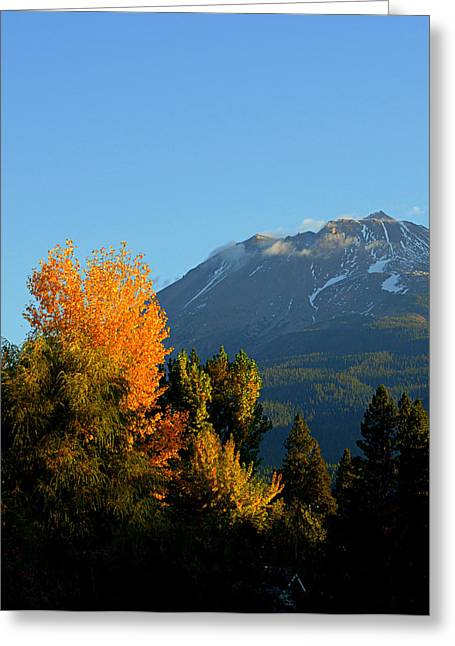 Lynn Bawden Greeting Cards - Mount Shasta Fall Greeting Card by Lynn Bawden