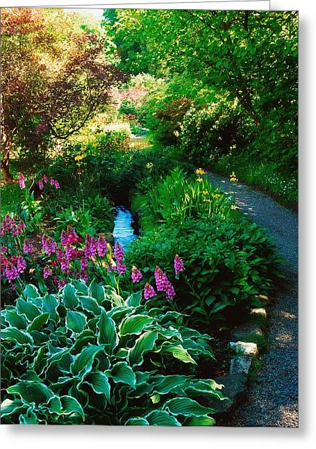 Hostas In Bloom Greeting Cards - Mount Usher Gardens, Co Wicklow Greeting Card by The Irish Image Collection
