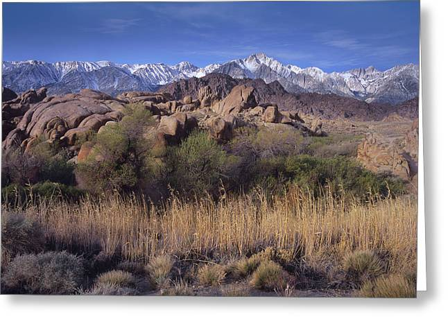 Mount Whitney Greeting Cards - Mount Whitney And The Sierra Nevada Greeting Card by Tim Fitzharris