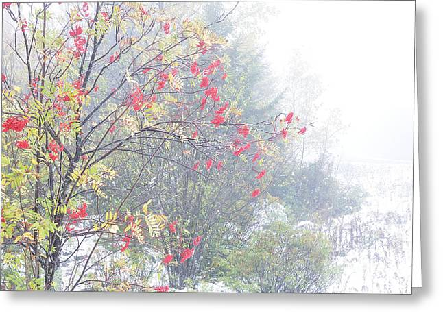 West Virginia Highlands Greeting Cards - Mountain Ash and Snow along the Highland Scenic Highway Greeting Card by Thomas R Fletcher