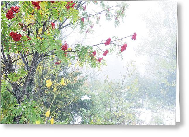 West Virginia Snow Scene Greeting Cards - Mountain Ash Fog and Snow Greeting Card by Thomas R Fletcher