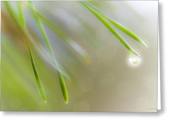 Pine Needles Greeting Cards - Mountain Dew Greeting Card by Ron Jones