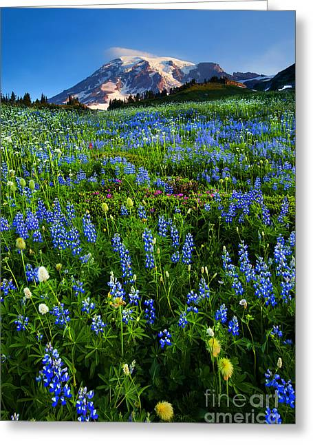 Anenome Greeting Cards - Mountain Garden Greeting Card by Mike  Dawson