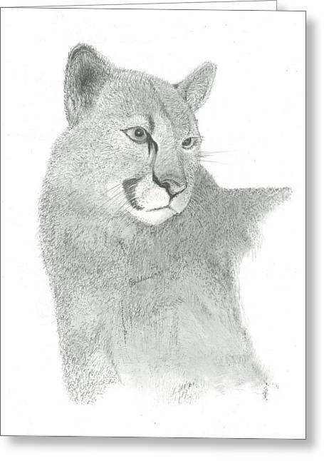 Wild Life Drawings Greeting Cards - Mountain Lion Greeting Card by EJ John Baldwin