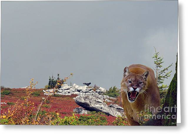 Growling Greeting Cards - Mountain Lion protecting his kill Greeting Card by Dan Friend