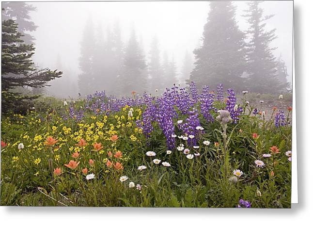 Dewdrops Greeting Cards - Mountain Meadow In The Mist Greeting Card by Bob Gibbons