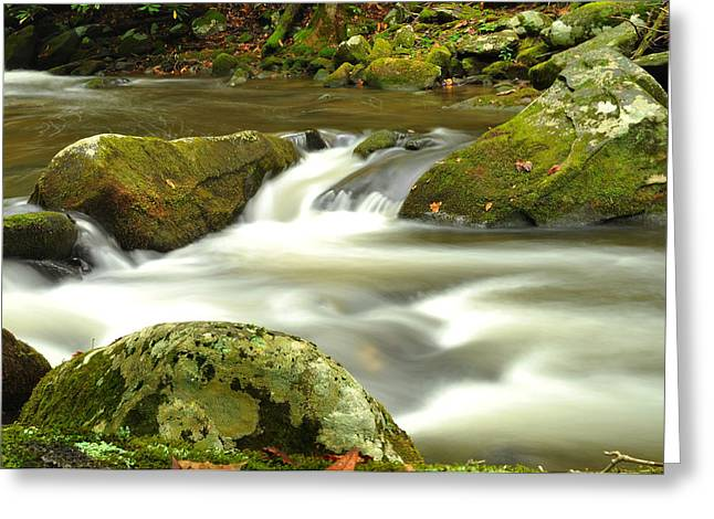 Great Smokey Mountains Greeting Cards - Mountain Stream 3 Greeting Card by William Jones
