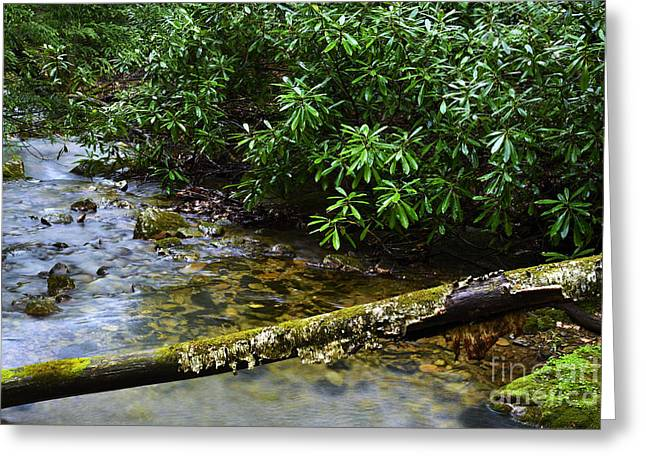 Rhododendron Maximum Greeting Cards - Mountain Stream and Rhododendron Greeting Card by Thomas R Fletcher