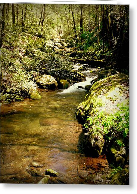 Mountain Stream Greeting Card by Cindy Wright