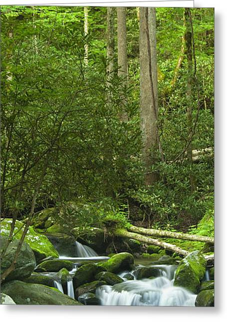 Rapids Greeting Cards - Mountain Stream Panorama Greeting Card by Andrew Soundarajan