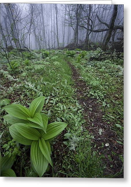 False Hellebore Greeting Cards - Mountains to Sea Trail Greeting Card by Rob Travis