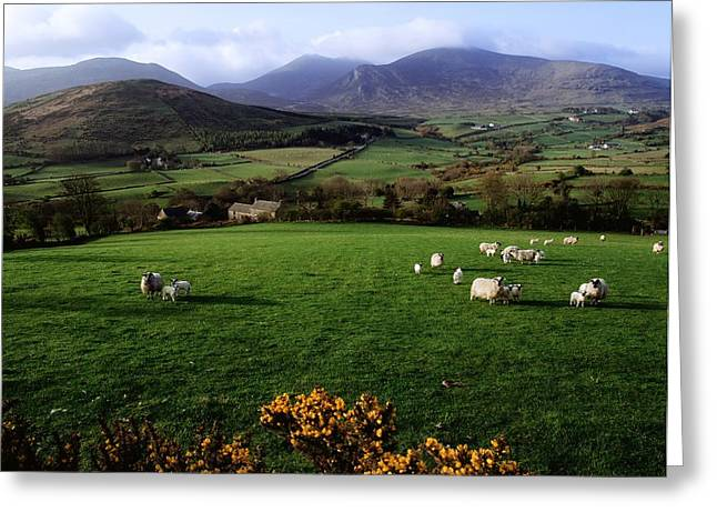 Domesticated Flower Greeting Cards - Mourne Mountains From Trassey Road, Co Greeting Card by The Irish Image Collection