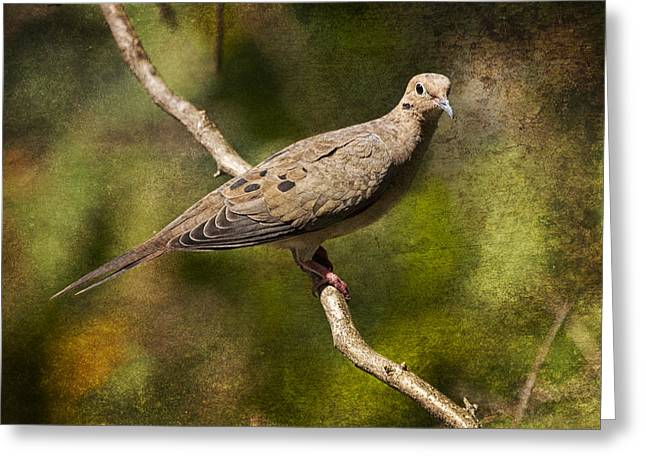 Gamebird Greeting Cards - Mourning Dove on a Branch Greeting Card by Randall Nyhof