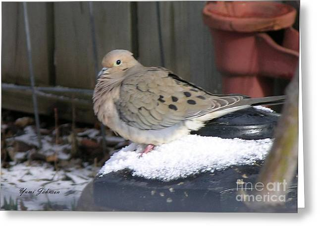 Sized Pyrography Greeting Cards - Mourning Dove Greeting Card by Yumi Johnson