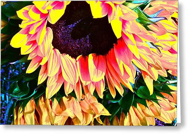Floral Photographs Greeting Cards - Mourning Greeting Card by Gwyn Newcombe