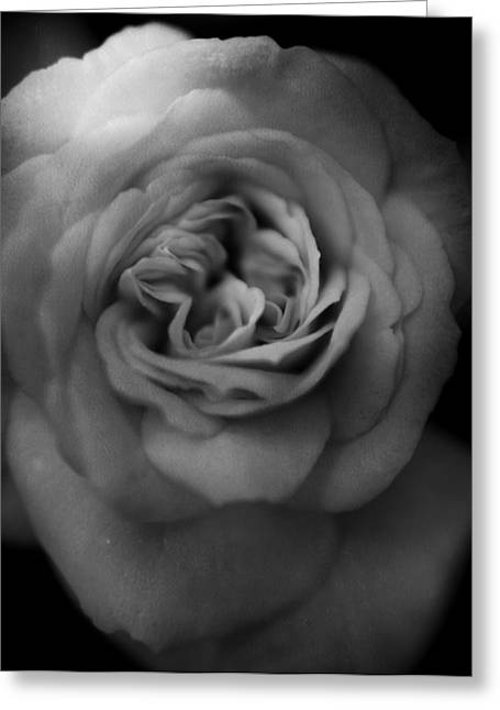 Macro Greeting Cards - Mourning You Greeting Card by Laurie Search