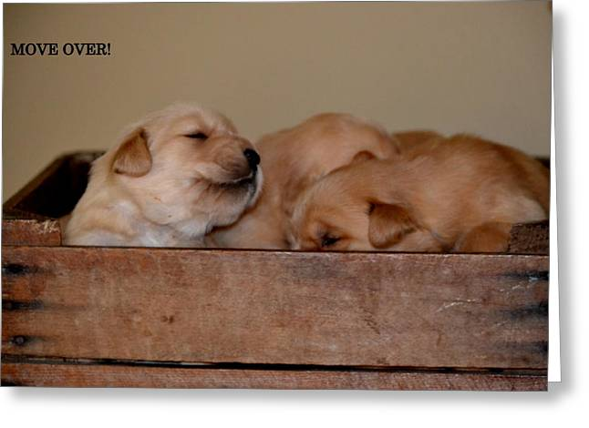 Puppies Pyrography Greeting Cards - Move Over Greeting Card by Brenda Alcorn