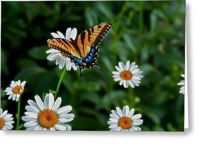 Moyers Greeting Cards - Moyers Butterfly - HDR Greeting Card by Wayne Stacy
