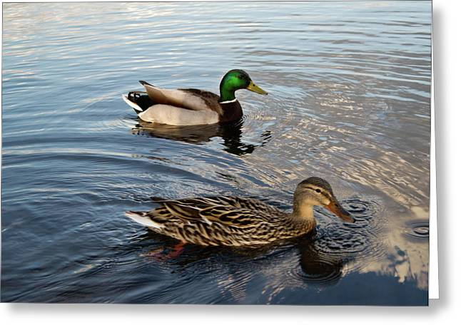 Mallard Greeting Cards - Mr and Mrs Duck on Parade Greeting Card by Douglas Barnett