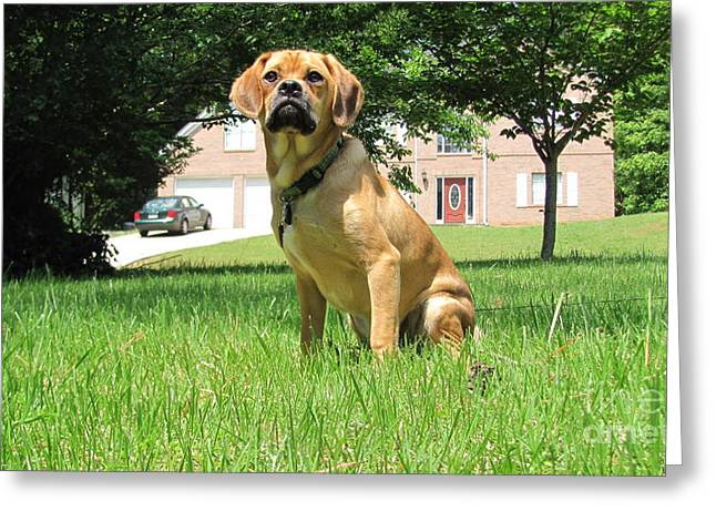 Silver Eye Shadow Greeting Cards - Mr. Darcy Puggle Pup Greeting Card by Stephen Peace