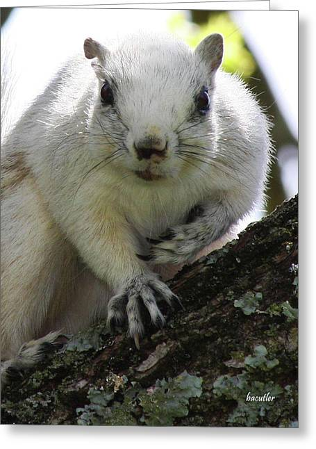 Fox Squirrel Greeting Cards - Mr. Inquisitive I  Greeting Card by Betsy A  Cutler
