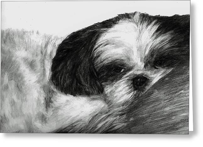 House Pet Drawings Greeting Cards - Mr Tibbs Greeting Card by Meagan  Visser