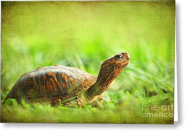 Up-armored Greeting Cards - Mr Turtle Greeting Card by Darren Fisher