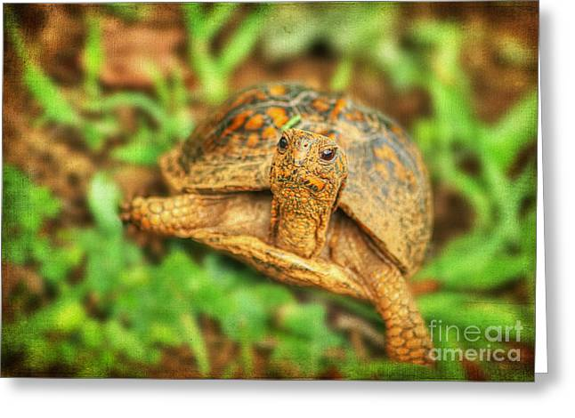 Up-armored Greeting Cards - Mr Turtle II Greeting Card by Darren Fisher