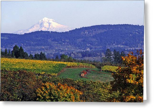 Fall Colors Digital Art Greeting Cards - Mt. Hood from a Dundee Hills Vineyard Greeting Card by Margaret Hood