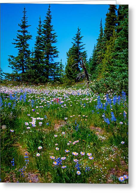 David Patterson Greeting Cards - Mt Rainier Meadow Greeting Card by David Patterson