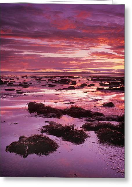 Boundary Waters Greeting Cards - Mud Flats At Low Tide Greeting Card by Kaj R. Svensson
