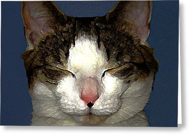 Photos Of Cats Digital Greeting Cards - Mug Shot Greeting Card by Dale   Ford