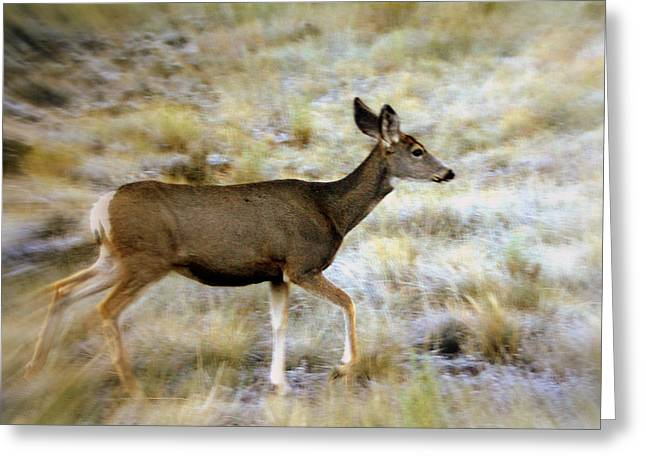 Mule Deer On The Move Greeting Card by Marty Koch