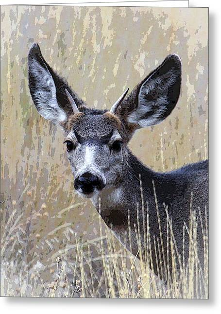 Award Winning Art Greeting Cards - Mule Deer Spike Greeting Card by Steve McKinzie