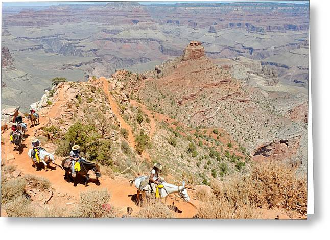 South Kaibab Trail Greeting Cards - Mules on a Switchback II Greeting Card by Julie Niemela