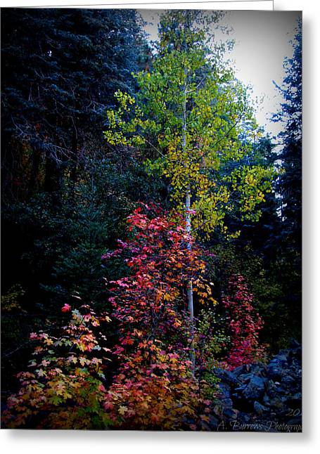 Prescott Greeting Cards - Multi-Colored Maple Leaves and Autumn Aspen Leaves Greeting Card by Aaron Burrows