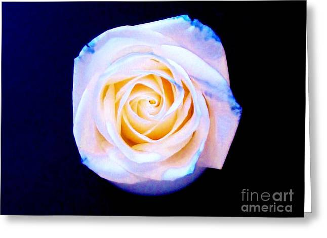 Rose Photos Greeting Cards - Multi Rose ll Greeting Card by Marsha Heiken