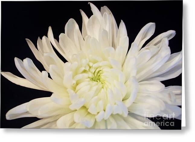 Floral Photos Greeting Cards - Mum Dressed In Black Elegance Greeting Card by Marsha Heiken