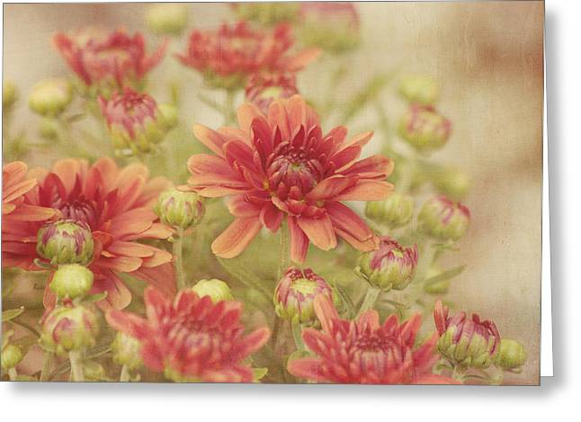 Close Focus Floral Greeting Cards - Mums the Word Greeting Card by Kim Hojnacki