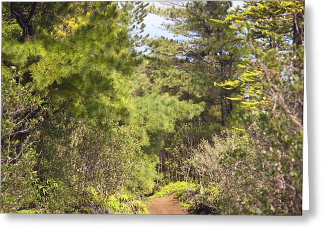 Munro Trail Greeting Card by Ron Dahlquist - Printscapes