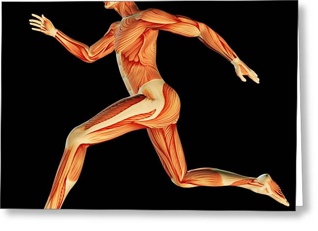Sprinter Greeting Cards - Muscular System Greeting Card by Pasieka